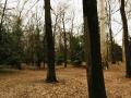 14-visita-guidata-giardino-villa_-cusani-tittoni-traversi-9-marzo_-2013-regis_