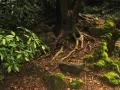 3-visita-guidata-giardino-villa_-cusani-tittoni-traversi-9-marzo_-2013-regis_