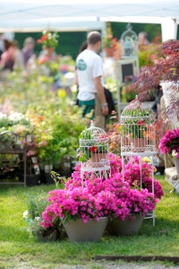 tra i fiori - Fotoclub fotoinfuga